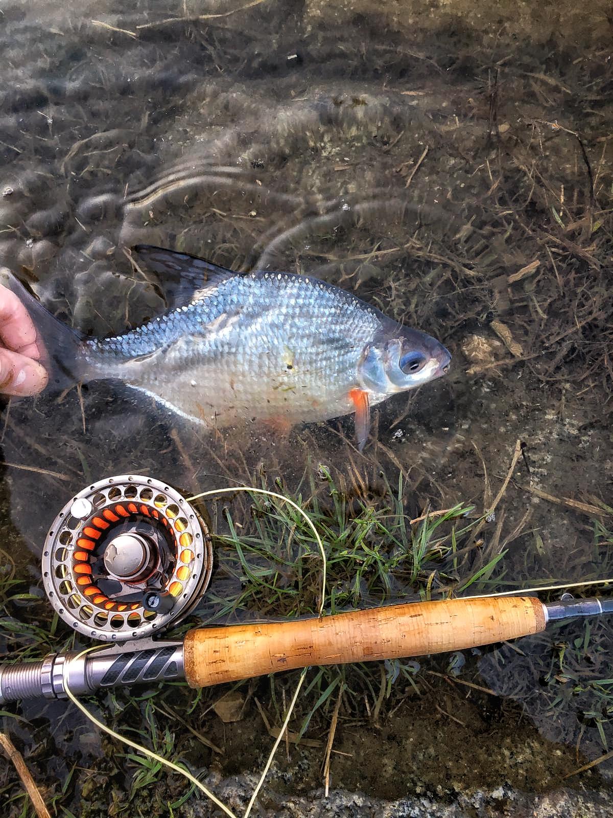 571476d4ce30 Jaro nám začíná zářit všemi svými barvami a pstruhová sezóna je už opravdu  za dveřmi. Pro říční lov bílé ryby nám ve všech tocích po letošní vydatné  zimě ...