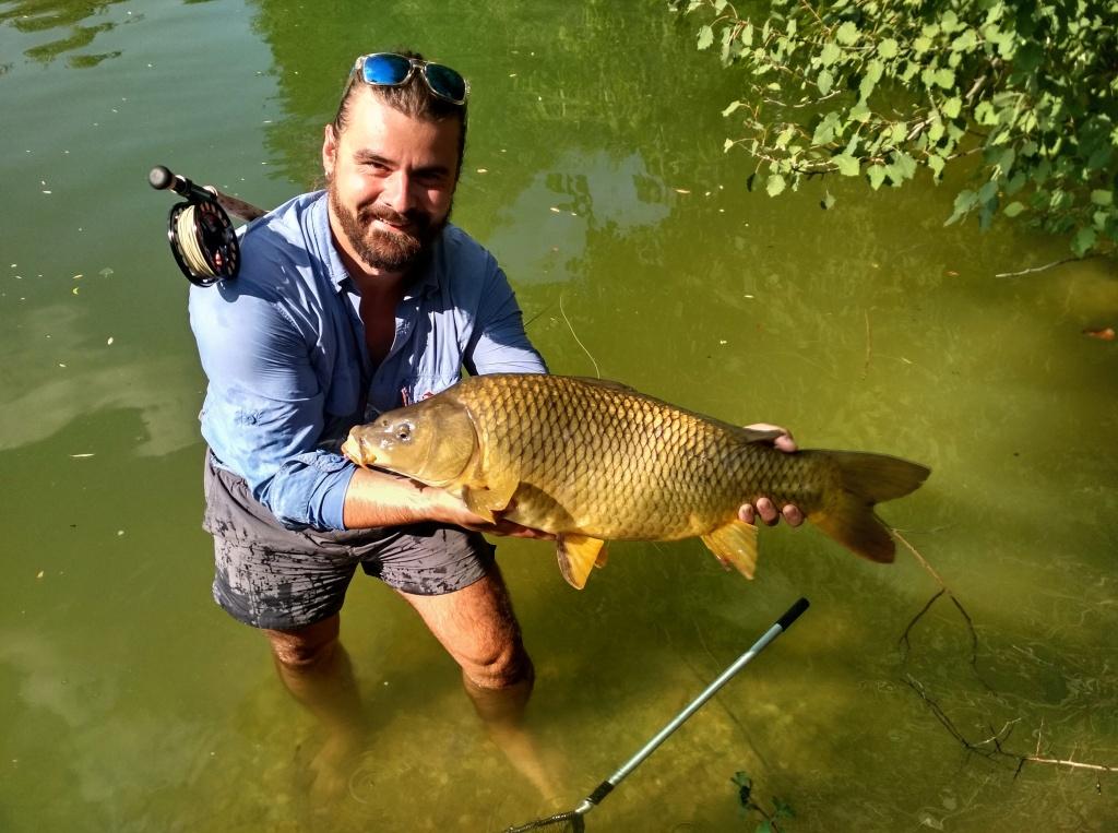 Krásný šupinatý kapr ve skvělé kondici pózuje svým zlatým lesklým tělem pro  fotku. Takto stavěná ryba potěší každého milovníka lovu kaprů na umělou  mušku. 86223991c7